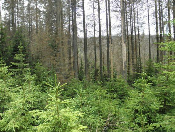 Las i jego mieszkańcy